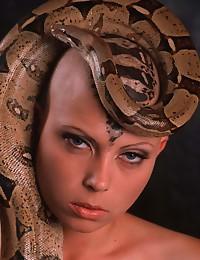 Bald head and snake
